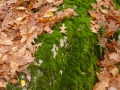 Leaves and Moss_ $75.JPG