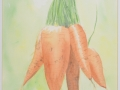 Fresh Carrots_watercolor_12x9_.JPG