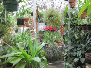 Bill Smiles' greenhouse. Mostly orchids because he is the orchid man!