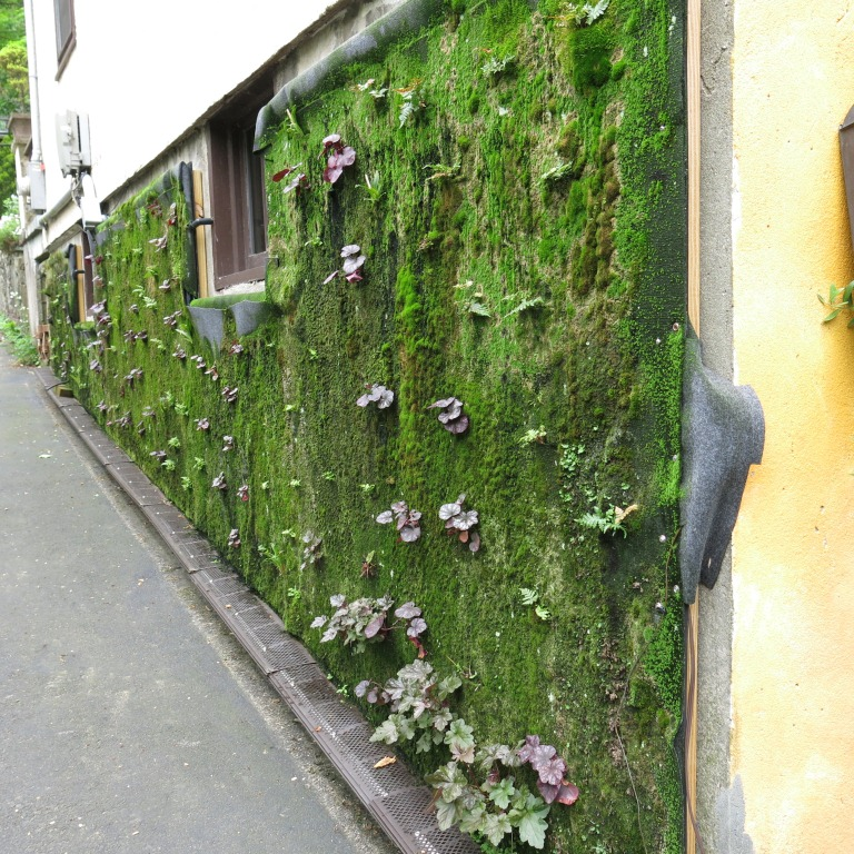 Vertical garden. May 2014