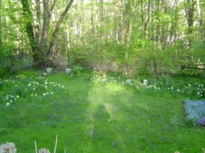 The woods that border my garden