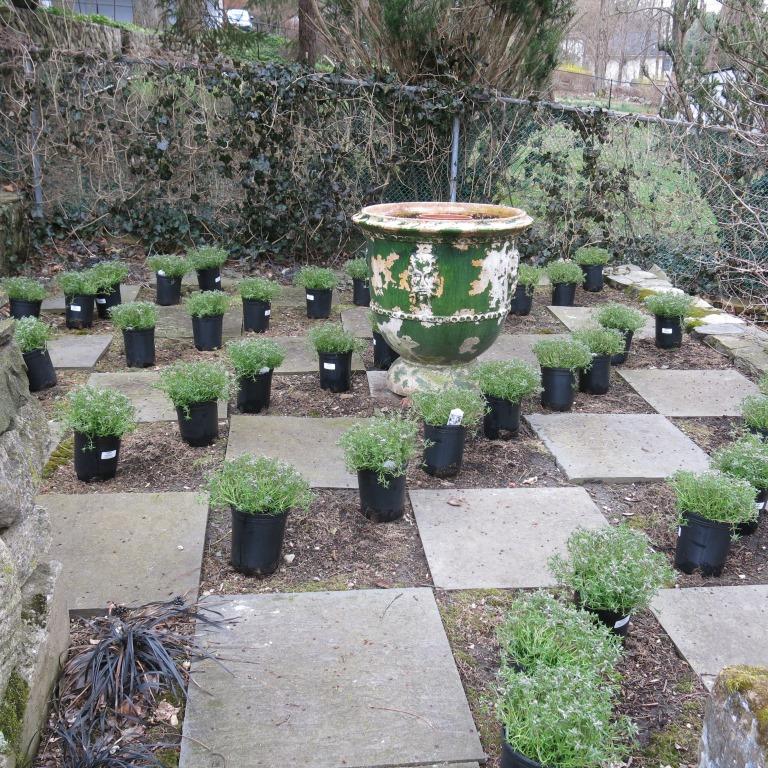On plantsmanship seeds of design for Checkerboard garden designs