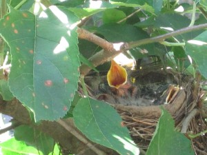 Babies in a nest