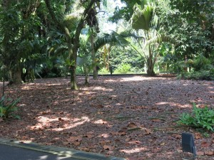 Whole leaf mulch at the Singapore Botanical Gardens