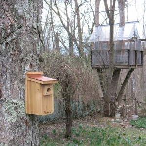 This bluebird house is not in the ideal location but I'm optimistic. It hosted wrens last year. Maybe this year I'll try to move it to a more appropriate location.