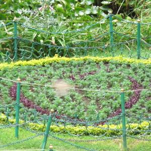 Ooty Bot garden